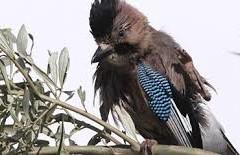 Birds of Lesvos (src: aeolislesvos.com)